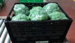 Brócoli Sol de Levante Frutas y Verduras