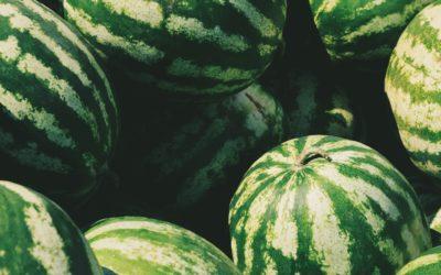 Comienza la plantación de sandía: datos básicos a tener en cuenta