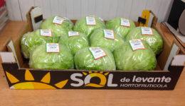 Lechuga Iceberg Sol de Levante Frutas y Verduras