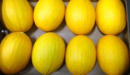 Melón amarillo Sol de Levante Frutas y Verduras