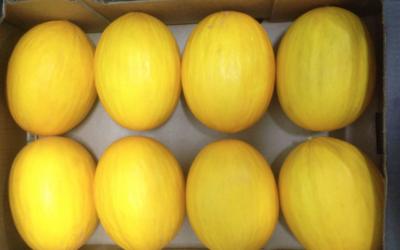 El melón amarillo, dulzura y vitaminas